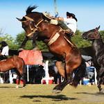 Pedro Viard y La Zorra de Arbarezo thumbnail