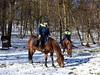 Bratislava Metropolitan Police horses (danube9999) Tags: police metropolitanpolice horse policehorse grazing snow forestpark bratislavaforestpark bratislava bratislavametropolitanpolice