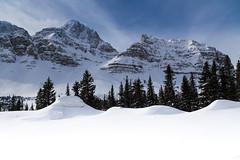 Mount Crowfoot (Dan Warkentin) Tags: canadianrockies snow tree snowbank mountain