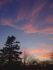 P2201104 (Paul Henegan) Tags: moon clouds crepuscule dusk sky trees