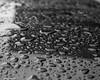 Monochrome Beads Of Water (that_damn_duck) Tags: blackwhite monochrome waterbeads raindrop rain water waterdrop nature droplet