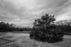 IMG_0483-HDR-Edit (DavidMC92) Tags: canon eos 7d sutton wilderness park norman oklahoma clouds rain efs 1018mm stm