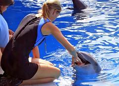 Flipper (Ocean Gypsy 69) Tags: art arty creative concept photoshop ocean water deep dolphin tricks jump miami seaquarium florida fish feeding oceangypsy69 gypsy 69 blue waves deerfield ft lauderdale pompano summer sea sun