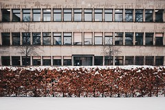 the hedge (dan.boss) Tags: ottorudolfsalvisberg modernism windows facade hedge snow winter x100f salvisbergbau university bern switzerland