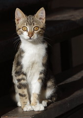 5Ds_115_tabby_kittens_04 by Stray cats photos -