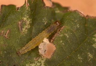 Caterpillar IMG_0620