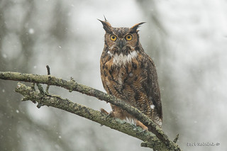 One wet owl