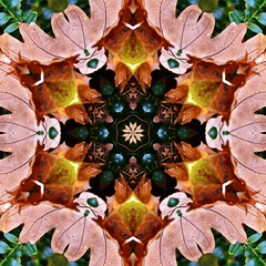 Kaleido Abstract 1764 (Lostash) Tags: life nature flora edited kaleidoscopes patterns shapes symmetry