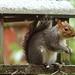 Snowy Squig