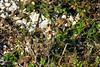 Find birds (HimzoIsić) Tags: bird animal outdoor