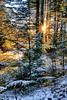 Winter woodland, Norway (Vest der ute) Tags: xt2 norway rogaland haugesund djupadalen trees tree snow winter sunstar branch outdoor forest fav25 fav200