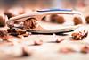 Nutcracker (J-Y-N-S) Tags: nutcracker casse noix nut object objet
