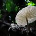 Belmopan - Mushroom in Counterlight