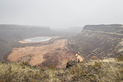 Desert dogs in Monument Coulee (johnwporter) Tags: hiking scramble mountains easternwashington washington desert centralwashington sunlakesdryfallsstatepark statepark coulee umatillarock 徒步 爬行 山 華盛頓東部 華盛頓州 荒漠 華盛頓中部 太陽湖乾瀑布州立公園 州立公園 豐碑深谷 深谷 尤馬蒂拉岩 labrador yellowlab 拉布拉多 黃拉不拉多 monumentcoulee