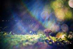 CMYK (www.studio360fotografia.es) Tags: helios442 setas valdeinfierno 58mm f2 m42 mushroom seta fantasia fantasy color bokeh desenfoque olympus omd em10 fungi cmyk moss nature naturaleza
