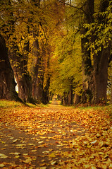 DSC02165 (Sch.Photography) Tags: alley leaves road trees autumn outdoors branch scenics tranquility nature allgäu goodweather
