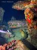 bvi 17 P8312441 (Pauline Walsh Jacobson) Tags: underwater scuba dive diving bvi water coral reef ocean sea marine life wideangle fish