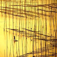 a lonely commute (sculptorli) Tags: abstract sunrise golden alba songcheng fujian china xiapu reflection alone lonely commute pacific beach landscape 日出 中国 福建 霞浦 waterscape 抽象 cina chine китай абстрактные astratto восход amanecer solitario einsam одинокий пляж strand spiaggia ездить pendeln