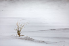 snowy  day in the dunes (ylemort) Tags: nature winter sanddune snow outdoors coldtemperature frost sand ice landscape season frozen nopeople beach grass scenics backgrounds plant white beautyinnature everypixel belgique belgium beautiful koksijde kust