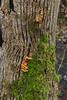 Textured Bark (Keith (foggybummer)) Tags: benholm mearns moss tree bark fungi texture
