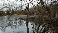 Carmack Woods Wetlands (dankeck) Tags: frozen pond thaw thawing woods trees ice net hockey icehockey ohiostate columbus ohio theohiostateuniversity osu franklincounty