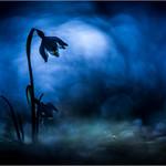 Blue night thumbnail