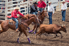 Calgary Stampede 2016 (tallhuskymike) Tags: calgarystampede rodeo calgary stampede action alberta event cowboy horse outdoors 2016 prorodeo greatestoutdoorshow