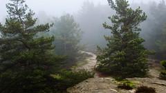 foggy morning in the forest #1 (Lichtfänger76) Tags: nikon d5100 18105 forest harz mountains deutschland germany wald landschaft landscape bäume trees nebel fog