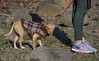 A Furry Coat (swong95765) Tags: dog coat fur warmth warm cute leash