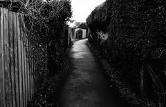 Narrow Escape (JamieHaugh) Tags: clevedon northsomerset england uk gb greatbritain outdoors sony a6000 lane alleyway narrow escaping blackwhite blackandwhite bw monochrome fences path buildings trees