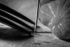 Symbols / Reading a book (Özgür Gürgey) Tags: 105mm 2018 albert bw macromondays myfavoritenovelfiction nikon s1 sigma borges fork glass grainy map pin istanbul d7100 vignette