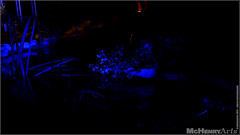 Enchanted Gardens 2017 - 148 (mchenryarts) Tags: arcen dunkelheit entertainment event events farbe fotojournalismus kasteeltuinen laternen licht lichtinszenierung lichtspektakel niederlande parkleuchten photojournalism schloessgaerten show garten laser lasershow