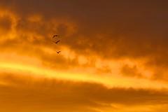 three go home (peet-astn) Tags: sky clouds sunset birds three 3