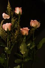 Roses for you (mara.arantes) Tags: roses dark petals leaf black green bouquet flickr nature natural