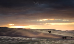 Golden rolling hills (Nick Panagou) Tags: tuscany italy light landscape longexposure nature naturallight sky sunset sunsetlight sun sunrays sunsetsky skyandclouds outdoor orangeskies orange clouds colours cloudysky dramatic bestshotoftheday bestphotographer tree trip travel contrast hill field fineart exposure exploring eos explore expressive expessivesky emotion