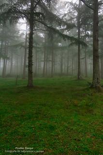 Niebla en Saldropo