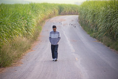 A man on the curving rural road. (baddoguy) Tags: adult adults only agriculture asia beauty in nature beginnings black hair cold temperature color image concepts copy space country road curve dawn day eyeglasses field freedom front view frowning full length green highway horizontal ideas infinity journey korat landscape loneliness males men morning nakhon ratchasima province one man person outdoors people photography plantation relaxation remote romanticism rural scene single lane solitude sugar cane sweater thailand the way forward tourist tranquil travel destinations tunnel vacations walking