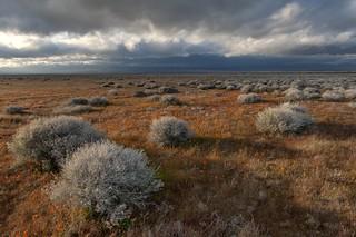 *Antelope Valley Springtime*