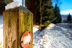 """Walkin' in a winter...."" (grahamrobb888) Tags: nikon nikond800 d800 nikkor nikkor20mmf18 cokin gradnd graduatedfilter gradblue birnamwood woods snowwoods snow signpost signs arrow pointer trees footpath highlands perthshire winter bluesky"