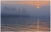 Through the Fog (etzel_noble) Tags: sunrisecolors lake naturelovers chasingsunrise sunriselovers minimalistphotography minimalist canon1740mm canon6d canonphotography naturephotography nature photography silhouette trees michiganlake lakeerie puremichigan sunrisephotography michigansunrise sunrise foggysunrise foggymorning foggy
