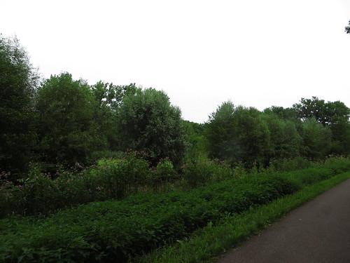 20140806 04 313 Jakobus Kanal Weg Bäume Weidenbaum