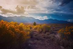 At the Gates (AirHaake) Tags: california monolake leevining mountain mountains evening light foreground landscape landscapephotography landscapephoto