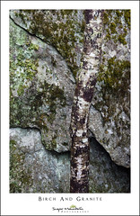 Birch And Granite (DKNC) Tags: blueridgeparkway northcarolina nc tree trunk birch rock granite lichens camo daleking