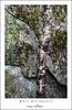 Birch And Granite (DKNC) Tags: blueridgeparkway northcarolina nc tree trunk birch rock granite lichens camo daleking