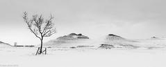 Snow Queen (Northern Kev) Tags: northumberland northumberlandia nikon d7200 nikond7200 snow winter cramlington lady ladyofthenorth sculpture landscape landsculpture highkey blackandwhite mono monochrome