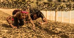 Crawling beneath a camouflage net. (Alex-de-Haas) Tags: 70200mm bootcamprun d750 dutch dutchies geestmerambacht holland langedijk nederland nederlands nikkor nikon noordholland bootcamp candid conquering dirt dirty endurance evenement event familie family fit fitdutchies fitness fun hardlopen joggen jogging mensen modder mud obstacle obstakel overwinnen people plezier recreatie recreation rennen renner renners run runner runners running sport sportief sportiviteit sporty summer team teamspirit teamgeest vies volharding zomer
