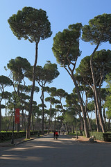Rome - Villa Borghese (Michael.Kemper) Tags: voyage travel travelling reise canon 30d efs 1755 f28 is usm canoneos30d canonefs1755f28isusm italien italia italy rom roma rome villa borghese villaborghese park garden garten pine pines pinie pinien tree trees baum bäume