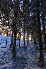 Path to light (NaturaRAW) Tags: snow sun sunlight path woods forest trees outdoors nature landscape 2017 canonef1635f4lisusm canoneos6d färgelanda kullberg landskap natur skog snö sol solljus träd vinter lillesäter västragötalandslän sverige se
