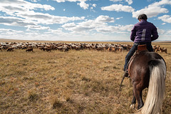 39369-012: Strengthening Carbon Financing for Regional Grassland Management in Mongolia (Asian Development Bank) Tags: mongolia mng khentiiprovince mongolian 39369 39369012 woman herder horse cattle sheep livestock animals laboranimals herd rural province outdoor agriculturalactivities agriculture