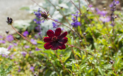 Flowers. (ost_jean) Tags: floral ostjean nikon d5200 7003000 mm f4563 bokeh bloemen fleurs nature natuur wild
